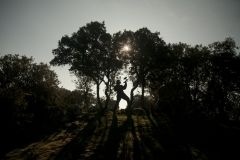 paintball-madrid-bosque-3-ociuspark